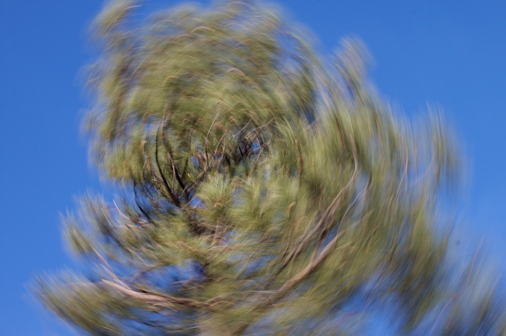 Tree in motion by @cogdog