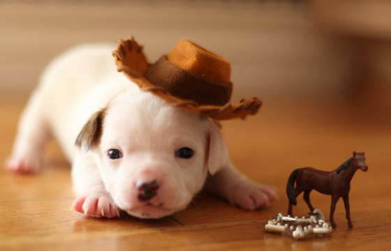 7-dog-in-a-cowboy-hat