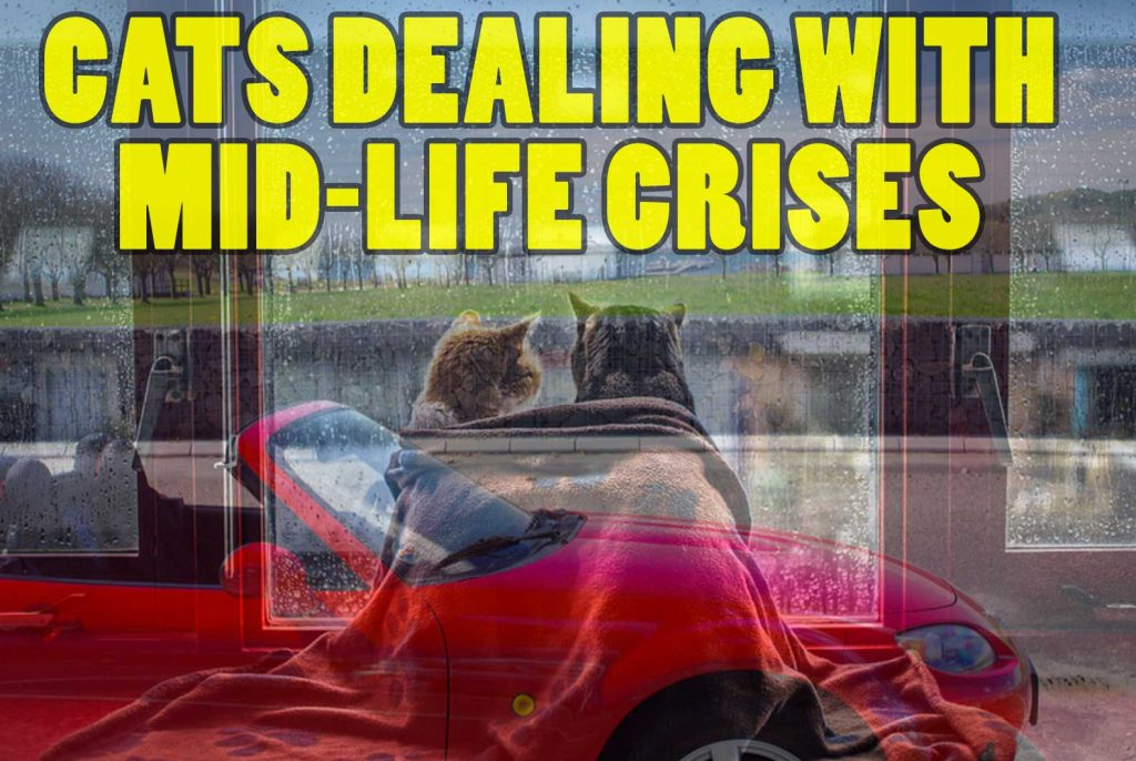cat-life-crises